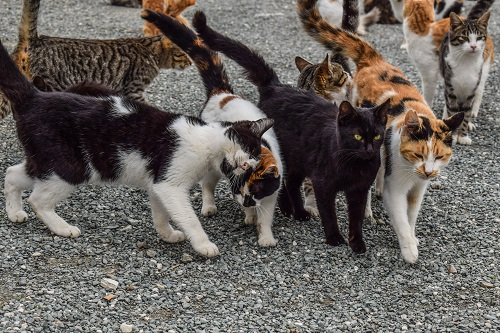Feral cat colony